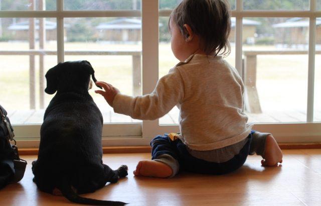 【ペットのためのDIY】室内犬が壁や柱をかじる3つの理由とその対策
