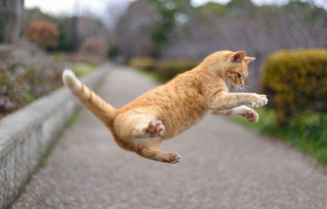 やっぱり猫が好き!かわいい猫がいつもお部屋にいるウォールステッカー